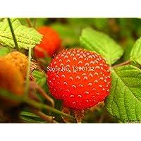 Vistaric 1000 unids raras semillas de frambuesa roja, semillas de frutas y vegetales para cultivar en casa