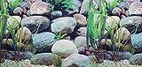 Pistachio Pet Aquarium-Hintergrund-Poster, doppelseitig, 48x 100cm