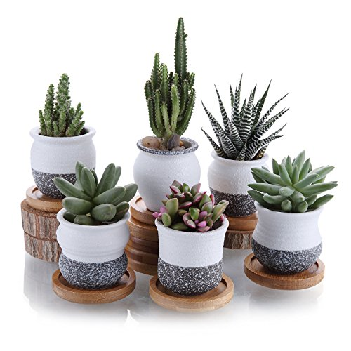 T4U 5.5cm Keramik Sukkulenten Töpfe Kaktus Pflanze Töpfe Mini Blumentöpfe Korea Stil Schnee Serie mit Bambus-Untersetzer 6 Stücke Set