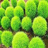 VISTARIC Netter Gesichts-Ausdruck-Töpfe Pflanze Gras kühlen Männer Büro Schreibtisch Wohnkultur wachsen Topf Mini magische Pflanzen Samen nur