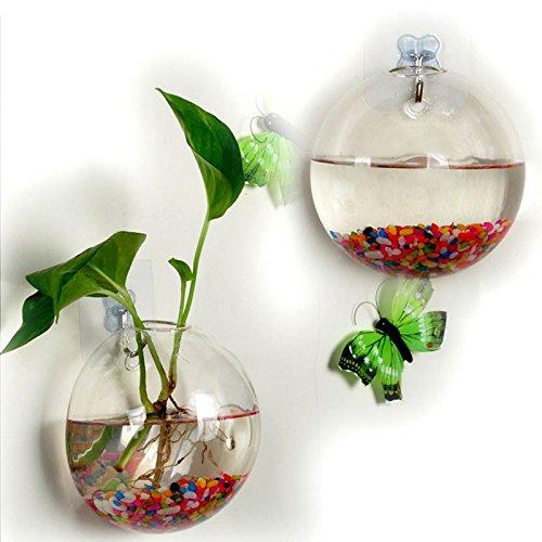 Fenghong Hängende Vasen Wandhalterung Glasschalen Fish Bowl Mini-Aquarium -
