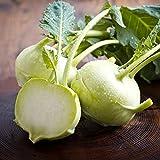 Best Kohlrabis - White Kohlrabi Delikates seeds - Brassica oleraceae var Review