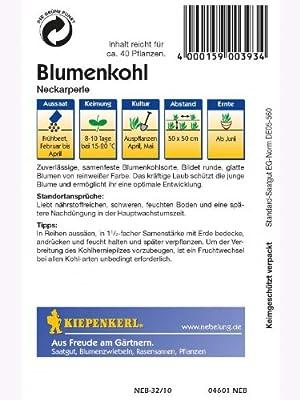 Blumenkohl Neckarperle von Kiepenkerl - Gemüse-Saatgut bei Du und dein Garten