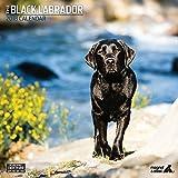 Magnet & Stahl'Labrador schwarz Traditionelle' 2018Kalender