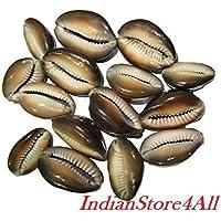 indianstore4all Set von 11Rare braun Kauri/KAUDI/kawdi/Shell Göttin Lakshmi Segen Puja