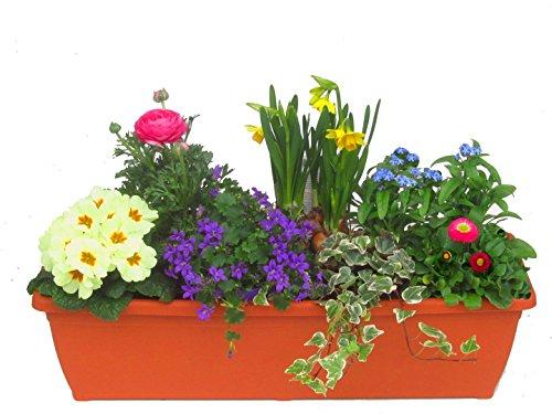 Shopping - Ratgeber 51xpJQLNSTL Frühlingsdeko - Zeigen Sie Freude am Frühling
