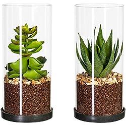 Homefinity 2er Set künstliche Sukkulenten grün im Glaszylinder ca. 9 x 20 cm
