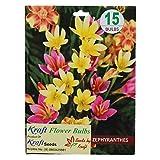 Kraft Seeds Zephyranthes Flower Bulb