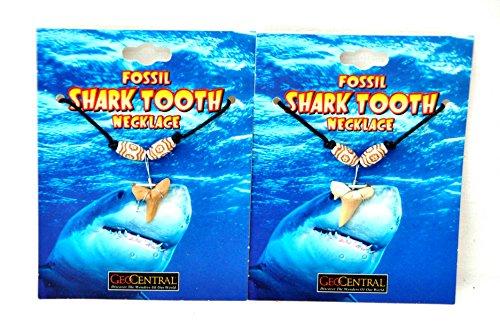 2 X echter HAI ZAHN an Halskette Surfer Style by schenkfix (Haifisch Halskette Für Zahn Kinder)