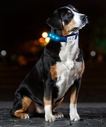 JuzPetz Rechargeable LED Dog Collar, Reflective Flashing Visible Collar [Water Resistant | 3 Glow Modes] Adjustable Light-Up Pet Safety Collar with USB Charging Cable 7