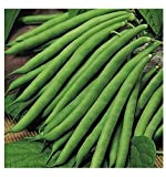 VEGETABLE CLIMBING FRENCH BEAN BLUE LAKE 325 SEEDS