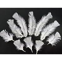 Deko-Woerner Federn 6/8cmB ca.150Stk weiß
