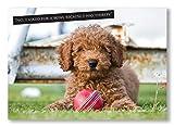 """Tarjeta de felicitación de críquet. Fun Cute Pupp bola de cricket y temáticas de tarjeta con mensaje en inglés """"no, pedí para cuenco porque I was día"""" grande A5tamaño, en blanco en el interior. Fotografía por Charles Sainsbury-Plaice"""