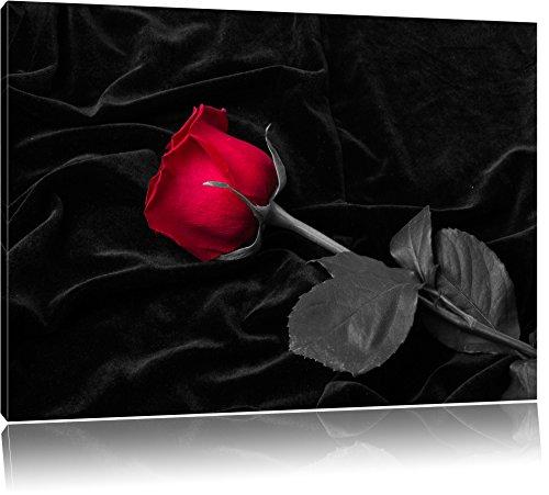 rote Rose gebettet auf schwarzem Samt schwarz/weiß Format: 100x70 auf Leinwand, XXL riesige Bilder fertig gerahmt mit Keilrahmen, Kunstdruck auf Wandbild mit Rahmen, günstiger als Gemälde oder Ölbild, kein Poster oder Plakat