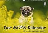 Der MOPS-Kalender (Wandkalender 2019 DIN A3 quer): ... mit den süßen Möpsen durch das Jahr (Monatskalender, 14 Seiten ) (CALVENDO Tiere)