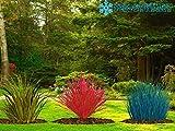 3er SET Ziergräser Festuca, Carex Oshimensis und Imperata Red Baron das Ultimative Farbenspiel für Ihren Garten
