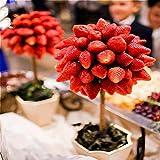 DaDago 100 Teile/Paket Erdbeerbaum Samen Seltene Frucht...