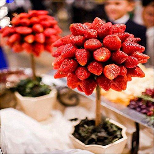 Egbert 100 pz/pacco fragola albero semi frutta rara fragola bonsai seed garden fai da te piantare
