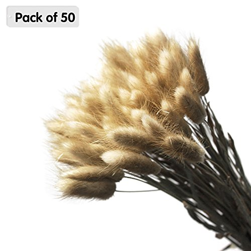 Zhi Jin arrangements de fleurs naturelles de Lagurus de Fuchs 45