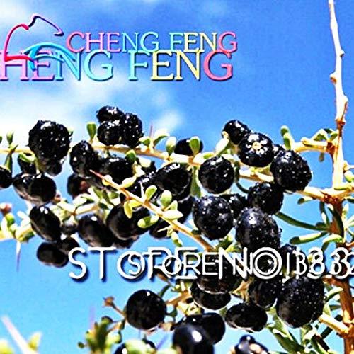 Shopmeeko 50pcs En gros 100% Black Wolfberry authentiques plantes Goji Berry Plantes succulentes bonsaï Plantes rares Bonsaï Plantes biologiques Semence: Noir
