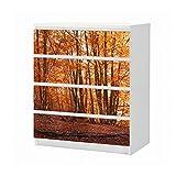 Set Möbelaufkleber für Ikea Kommode MALM 4 Fächer/Schubladen Wald Herbst Birke bunt Blätter Landschaft Aufkleber Möbelfolie sticker (Ohne Möbel) Folie 25B1588