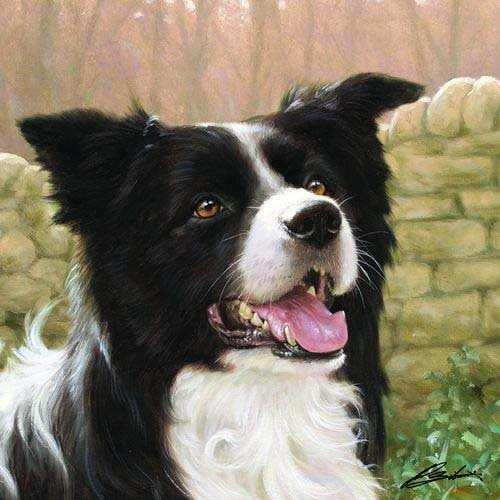 border-collie-at-home-on-the-farm-square-card