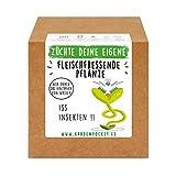 Garden Pocket - Fleischfressende Pflanzen