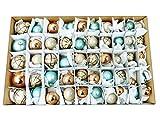 50 tlg Weihnachtskugeln Set GLAS 4 Größen Christbaumkugeln Baumschmuck Weihnachtsbaum