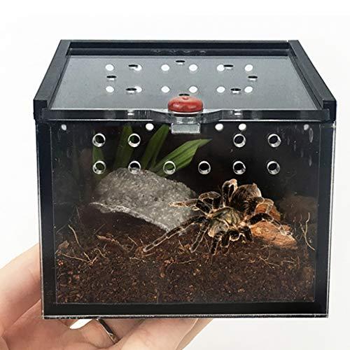FLAMEER Terrarium Zuchtbox Fütterungsox für Reptilien Schildkröte Spinne Insekt Schnecke Frosch, 8,5x8,5x6,5cm