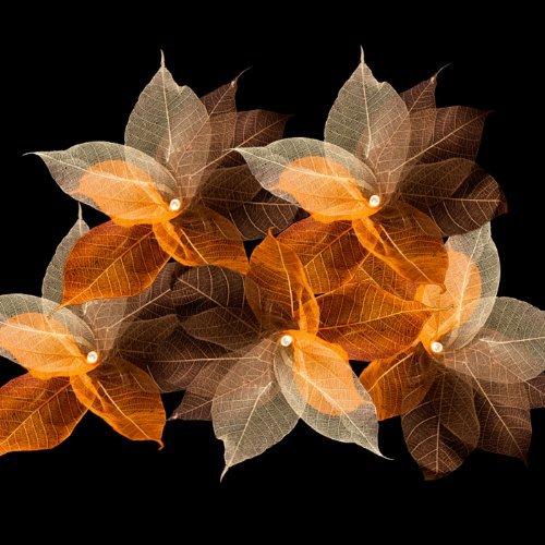 Blaze On Lichterkette mit natürlich wirkenden Blättern, Rustic Tones, 10 Lamps - 5 Metre Long (Natürliche Blatt 5)