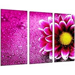 Poster Fotográfico Decoracion Flor Rosa, Margarita Rosa Tamaño total: 97 x 62 cm XXL