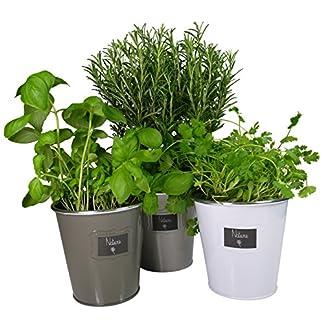 Khevga – Juego de 3 maceteros de metal para hierbas
