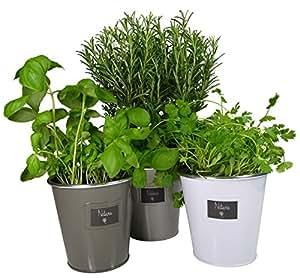 Khevga lot de 3 pots herbes aromatiques en m tal amazon - Herbes aromatiques en cuisine ...