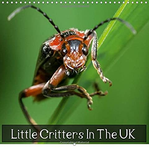 Little Critters In The UK 2016: World of Insects