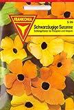 Schwarzäugige Susanne, Thunbergia alata, ca. 10 Samen