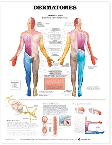 Anatomical Chart...