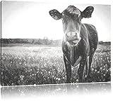 Einzelne Kuh auf Butterblumenwiese in der Abendsonne Kunst Kohle Effekt, Format: 60x40 auf Leinwand, XXL riesige Bilder fertig gerahmt mit Keilrahmen, Kunstdruck auf Wandbild mit Rahmen, günstiger als Gemälde oder Ölbild, kein Poster oder Plakat