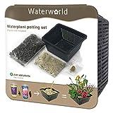 BOTANICLY | Plante aquatique – Waterworld Aqua Set - set de pots pour tous les types de plantes aquatiques (panier, étang, gravier, terreau et engrais pour plantes) | Hauteur: 10 cm