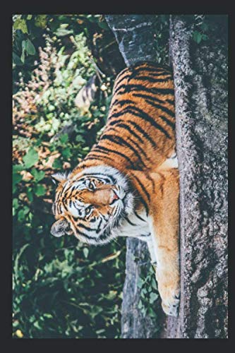 tiger/cat - notebook/paper journal - robust, flexible, wipeable cover - 120 pages (6x9 inches): checked journal/notebook - 6x9 inches (DIN a5) colored tiger cover