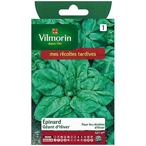Vilmorin - Sachet graines Epinard geant d'hiver