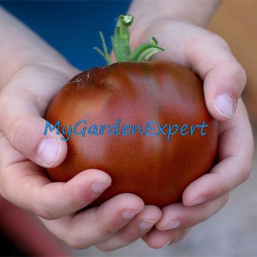 50pcs / lot frais rares Graines Black Prince Tomate 100% bio NON-OGM fruits Semences potagères jardin Bonsai plantes
