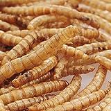 Séquoia Sac Mealworms Vers de Farine en Vrac pour Oiseau/Animaux Sauvages Friandise Protéinée Volailles 3.5OZ
