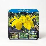 Jetzt einsetzen ! Komplettes Wasserpflanzenpaket ,Teichpflanzen