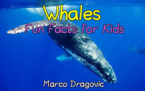 Whales: Fun Facts for Kids, Picture Books for Kids (English Edition)