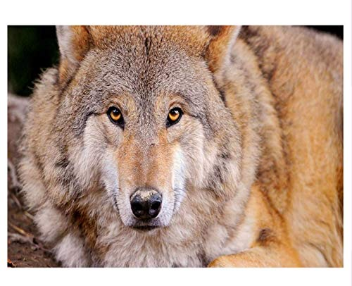 LIWEIZUAN Diamant Broderie Cool Wolf Image Zone Complète Foret De Résine Ronde Peinture Au Point De Croix Strass Inachevé Bricolage-30x40cm
