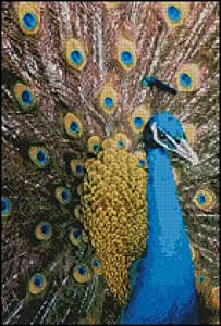 "Peacock Complete Counted Cross Stitch Kit 15"" x 10"""