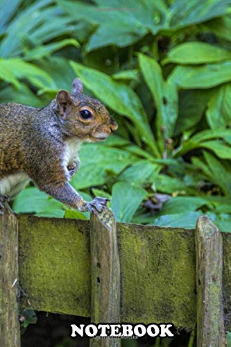 Notebook: Squirrels Are Members Of The Family Sciuridae A Family , Journal for Writing, College Ruled Size 6