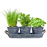 Geschenkartikel-Shopping Herb Garden with a three Herb Pots in Tray Basil Chives Earth Gift, Christmas Gift Idea