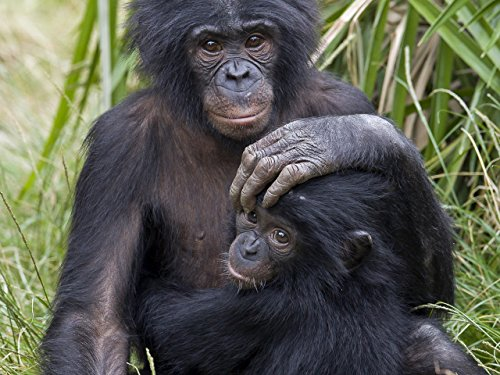 bonobos-grey-seal-cheetah-lemur
