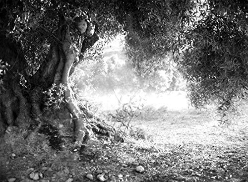 VLIES Fototapete-OLIVENBAUM-300x223 cm-6 Bahnen-(201595)-Inkl. Kleister-EASYINSTALL-PREMIUM-S/W Baum Bäume Wald Wand-Dekoration Moderne Motiv-Tapete Bild Design Panorama Natur Landschaft XXL Poster